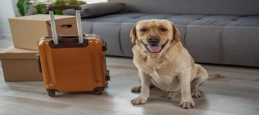 Things to do When Moving with Pets