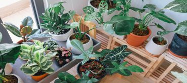 Tips on Moving Your Plants With You